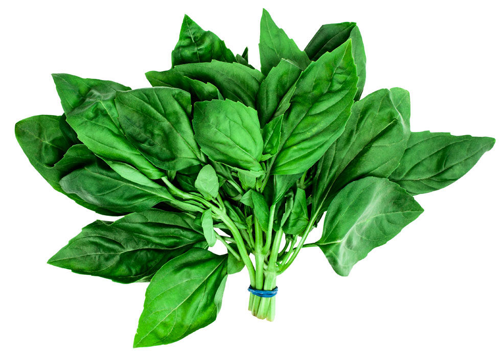 It's better to keep basil sitting out in a fresh cup of water, like cut flowers. It wilts faster in the refrigerator and absorbs the smells of all the food around it.