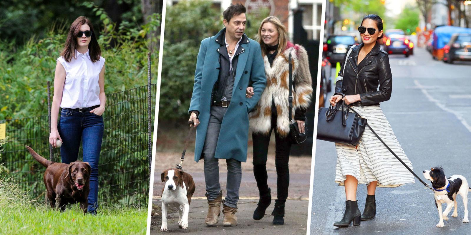 celebrity dogs | Celebrity Dog Blog