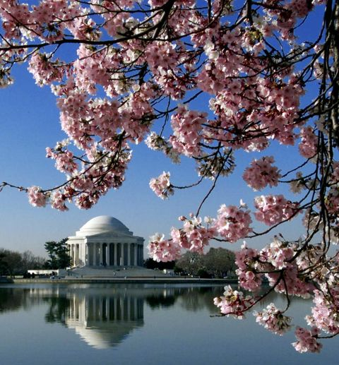 Best Cities To Visit In The Spring In The United States