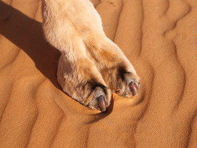 Camel Toe CamelNot Product - New Product to Fix Camel Toe