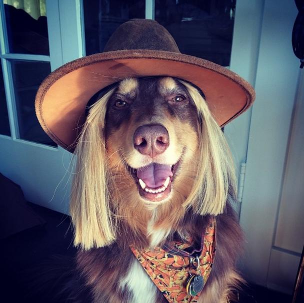 Amanda Seyfried Dog Instagram - Best Celebrity Instagrams